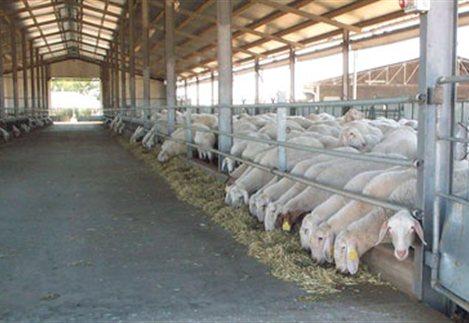 Οι αιτήσεις για αδειοδότηση κτηνοτροφικών εγκαταστάσεων Καλαβρύτων