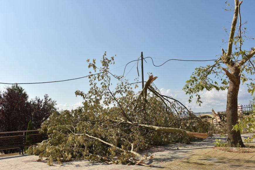 Καθαρισμός αλσών από σπασμένα δέντρα στο Δήμο Ν.Προποντίδας