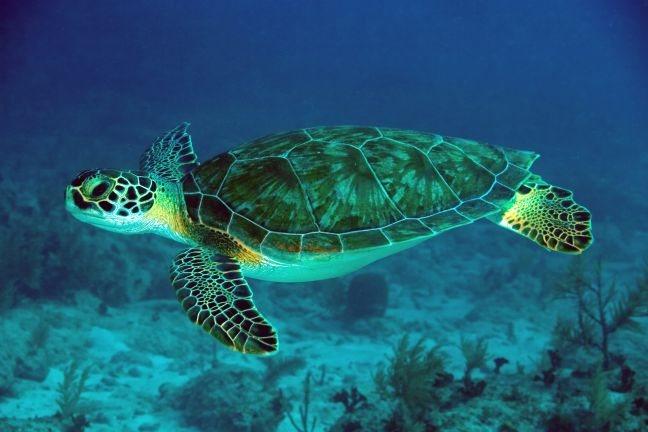 Εθελοντική εργασία για την προστασία της θαλάσσιας χελώνας