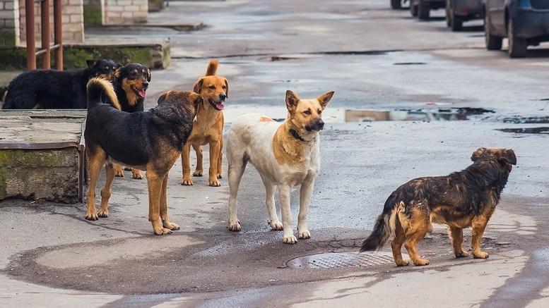 Πρόγραμμα Διαχείρισης Αδέσποτων ζώων στο Δήμο Λοκρών
